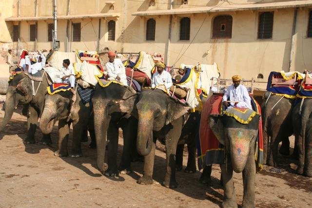 Elephants and their riders at the Amber Fort in Jaipur.