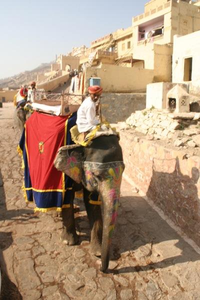 An elephant and his rider at the Amber Fort in Jaipur.